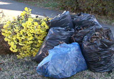 Udvari, kerti hulladékok elszállítása Érmihályfalván